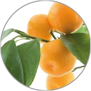 Medisana apelsinų eterinis aliejus, 10 ml 2