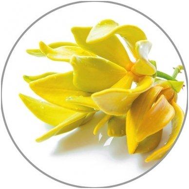 Medisana kanangų eterinis aliejus Ylang-Ylang, 10 ml 2