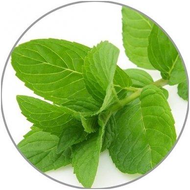 Medisana pipirmėčių eterinis aliejus Peppermint, 10 ml 2